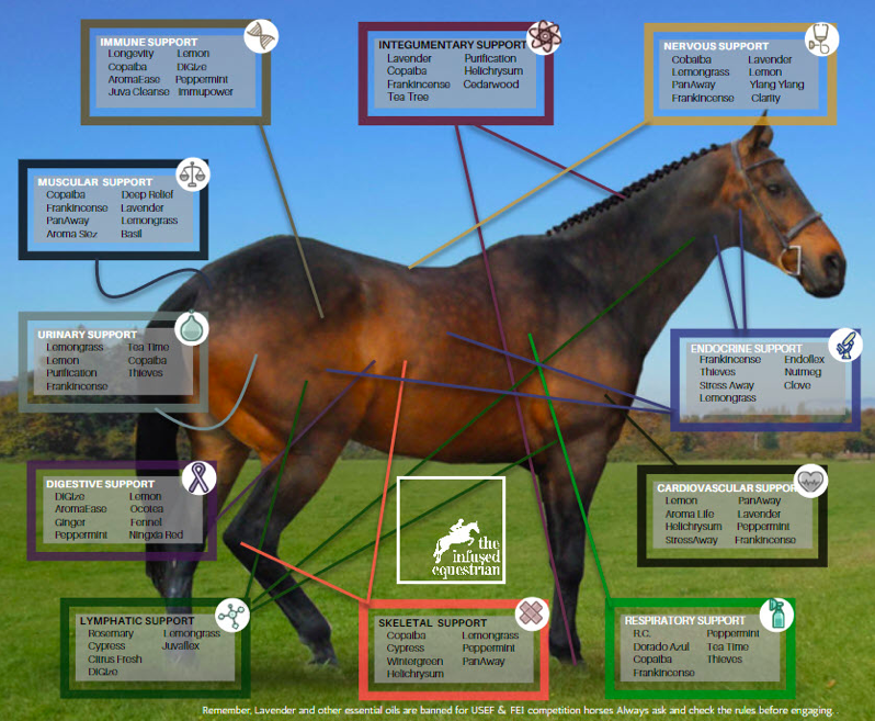 Equine Aromatherapy Chart by The Infused Equestrian.